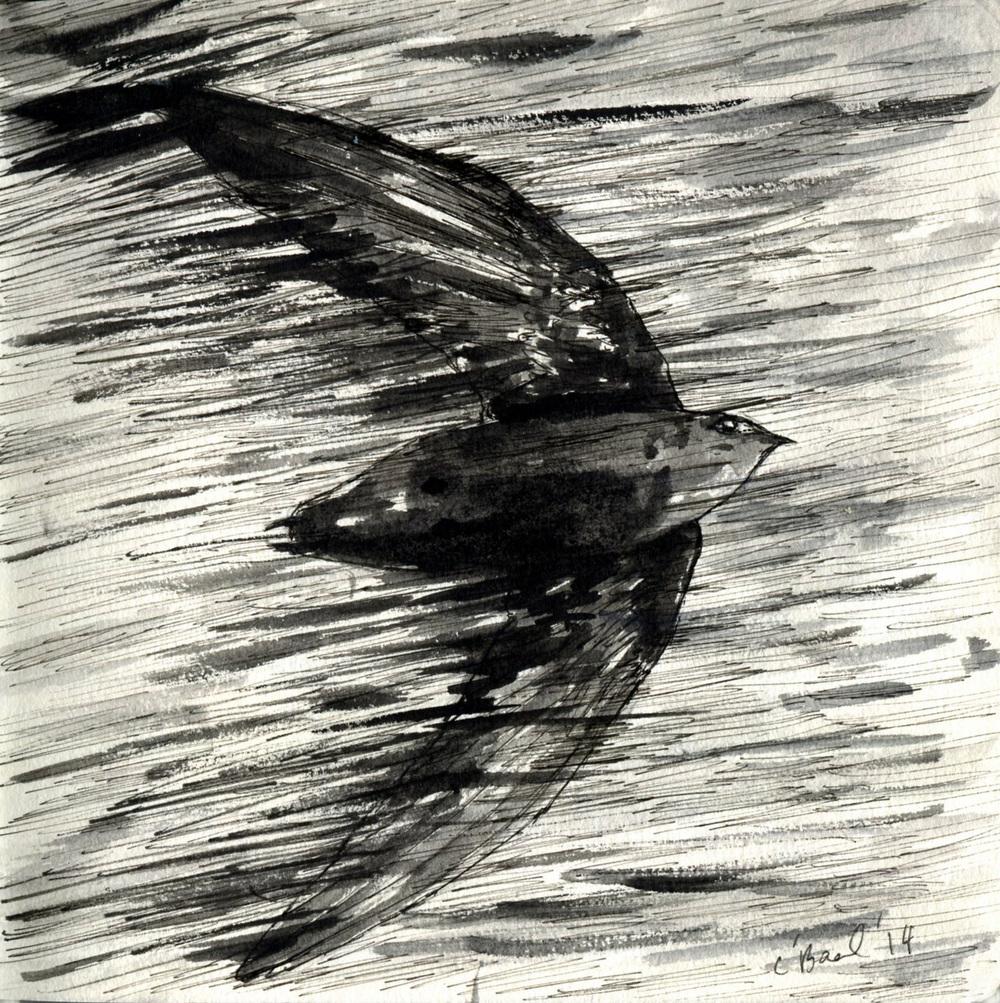 28. Chimney Swift