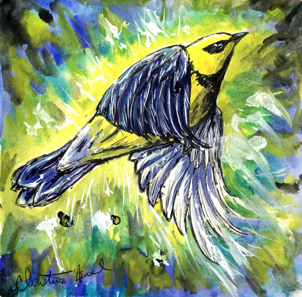 30. Lawrence's Warbler