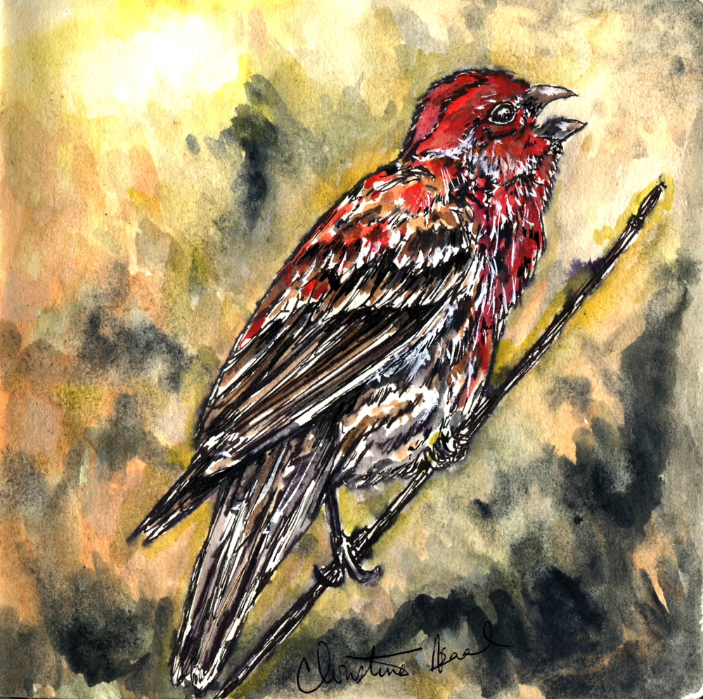 32. House Finch
