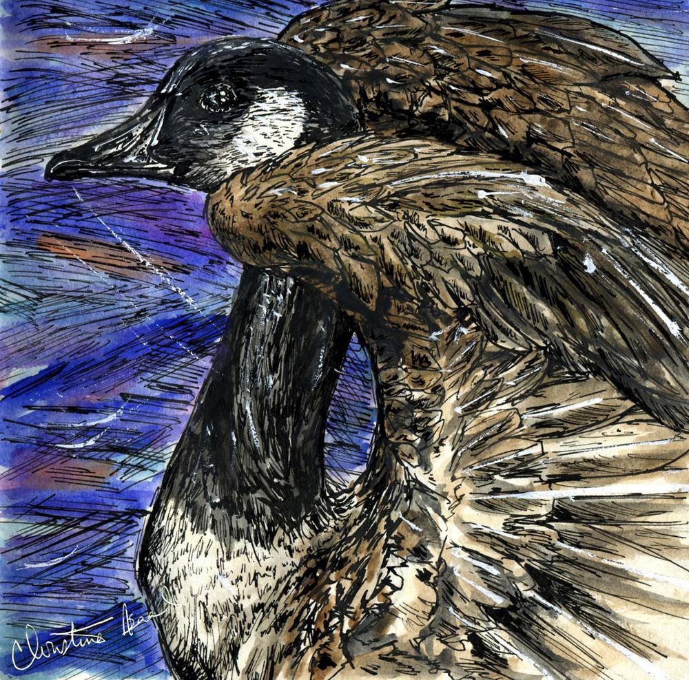 34. Canada Goose