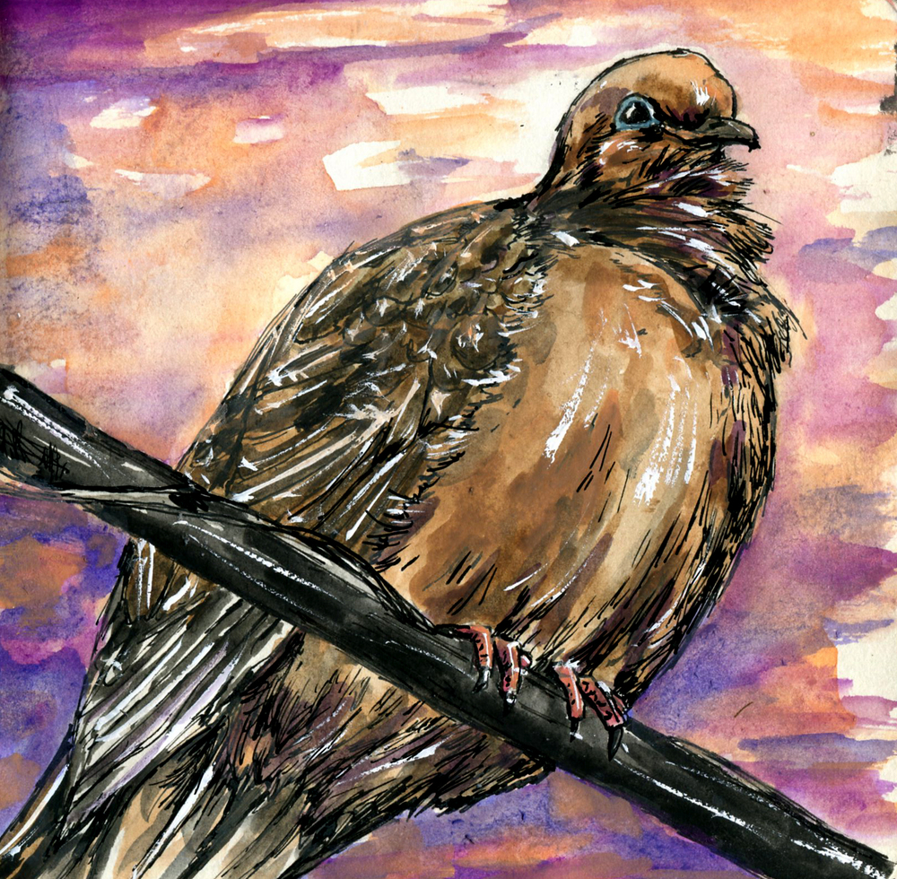 42. Mourning Dove