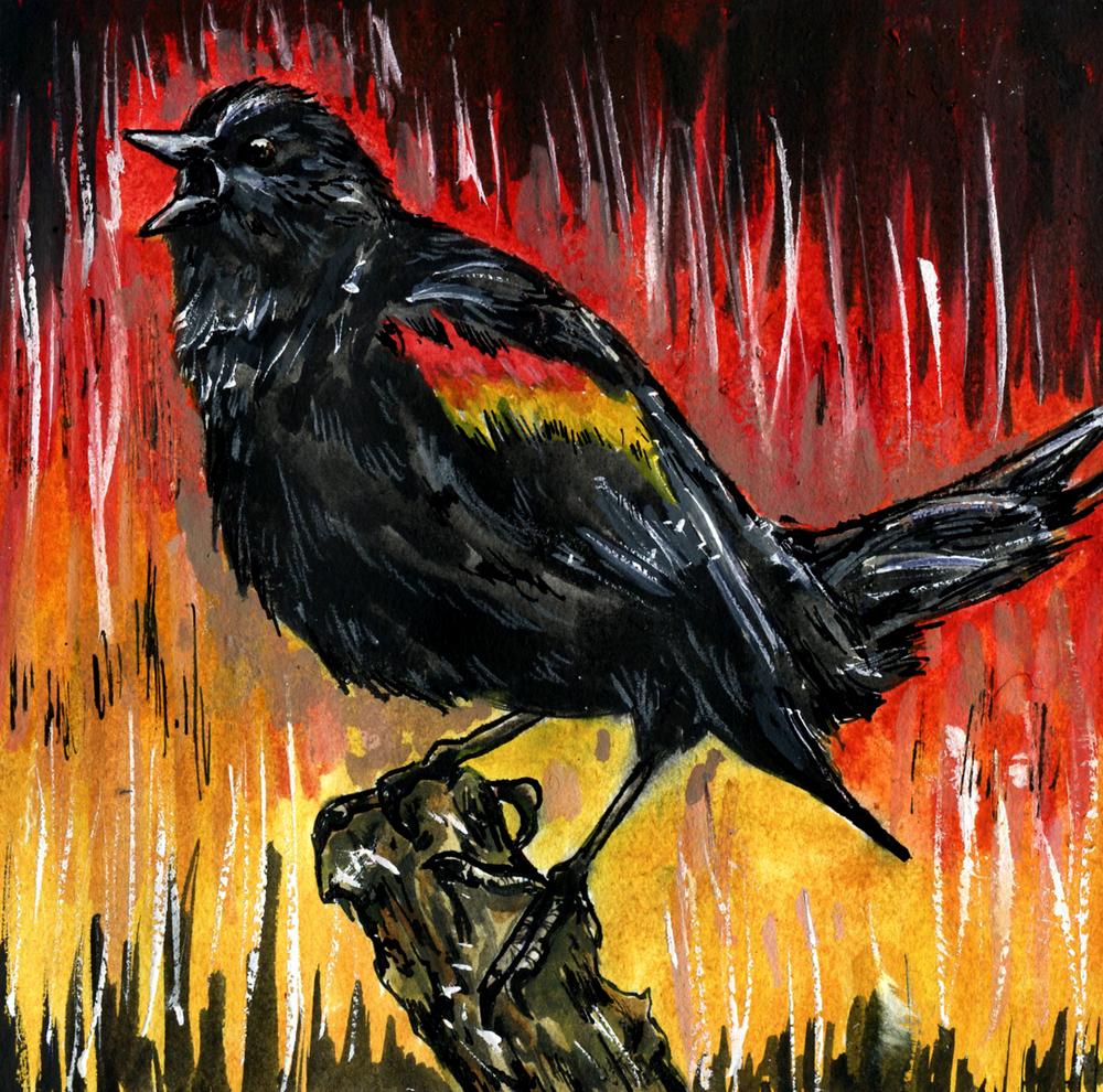 45. Red-winged Blackbird