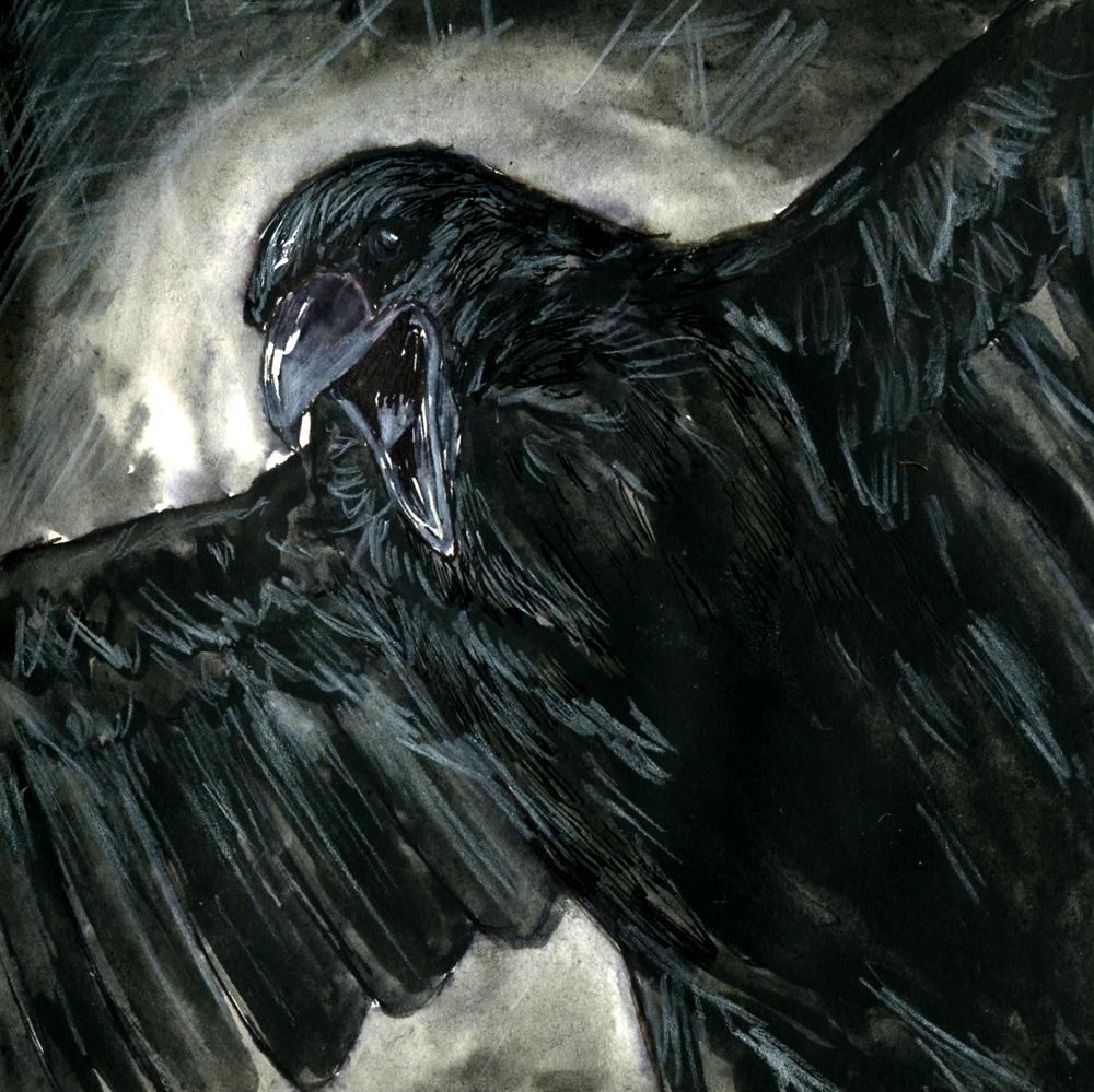 47. Common Raven