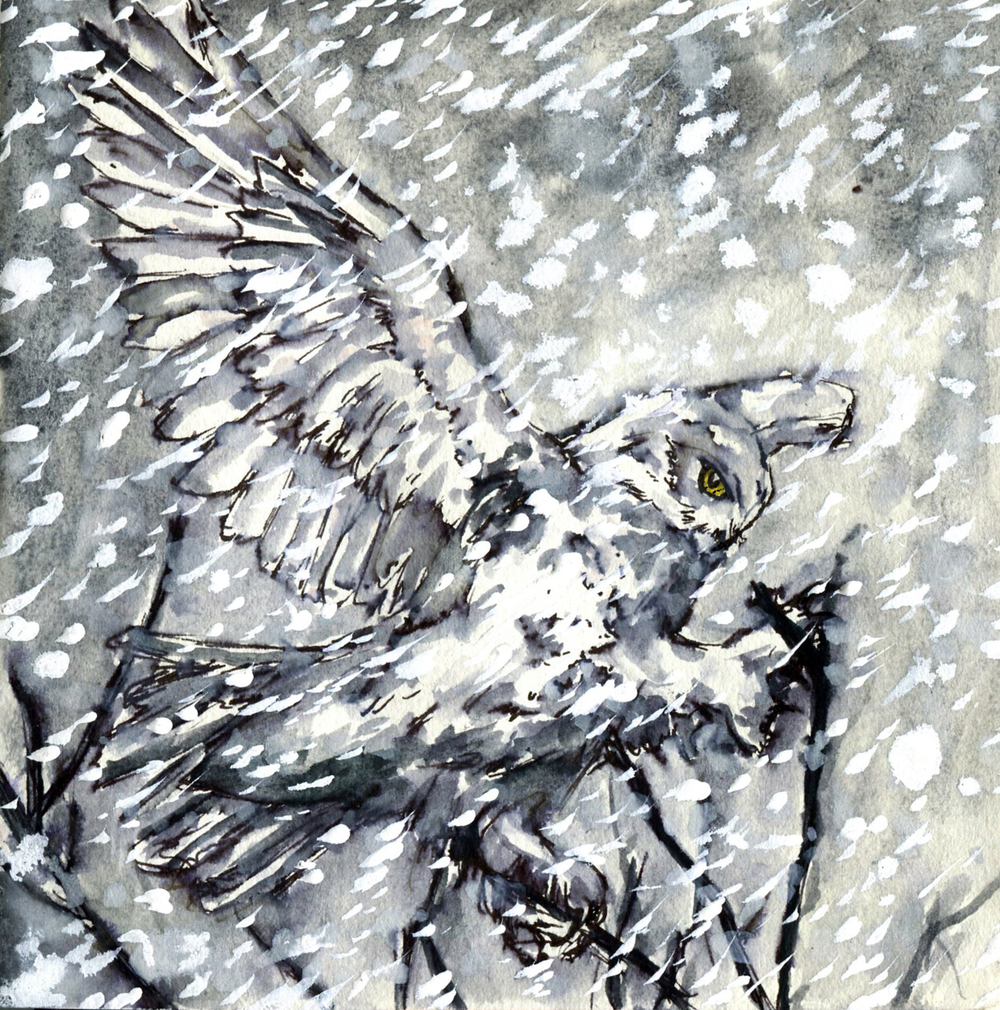 53. Snowy Owl