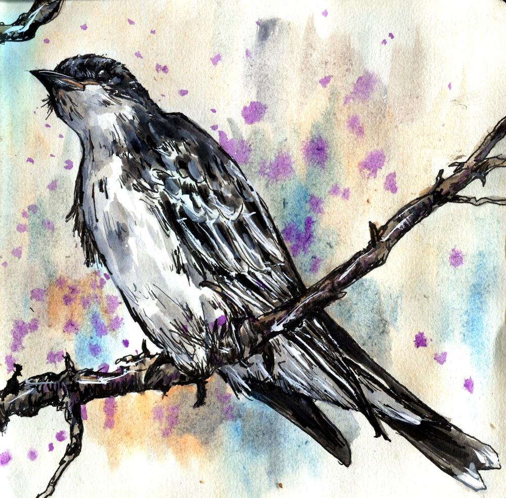 61. Eastern Kingbird