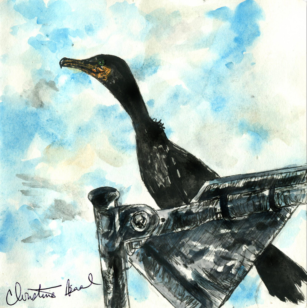 62. Double-crested Cormorant