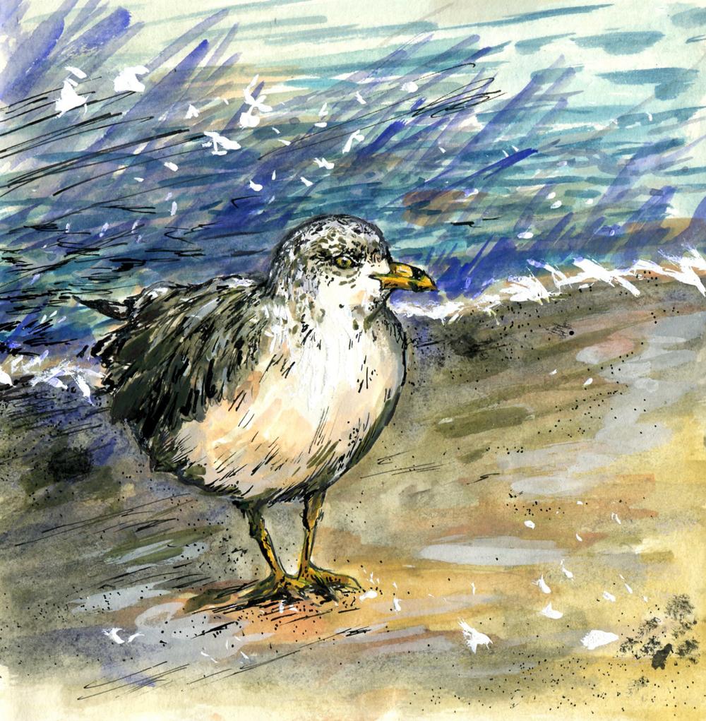 68. Ring-billed Gull