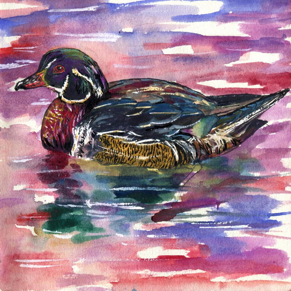 74. Wood Duck