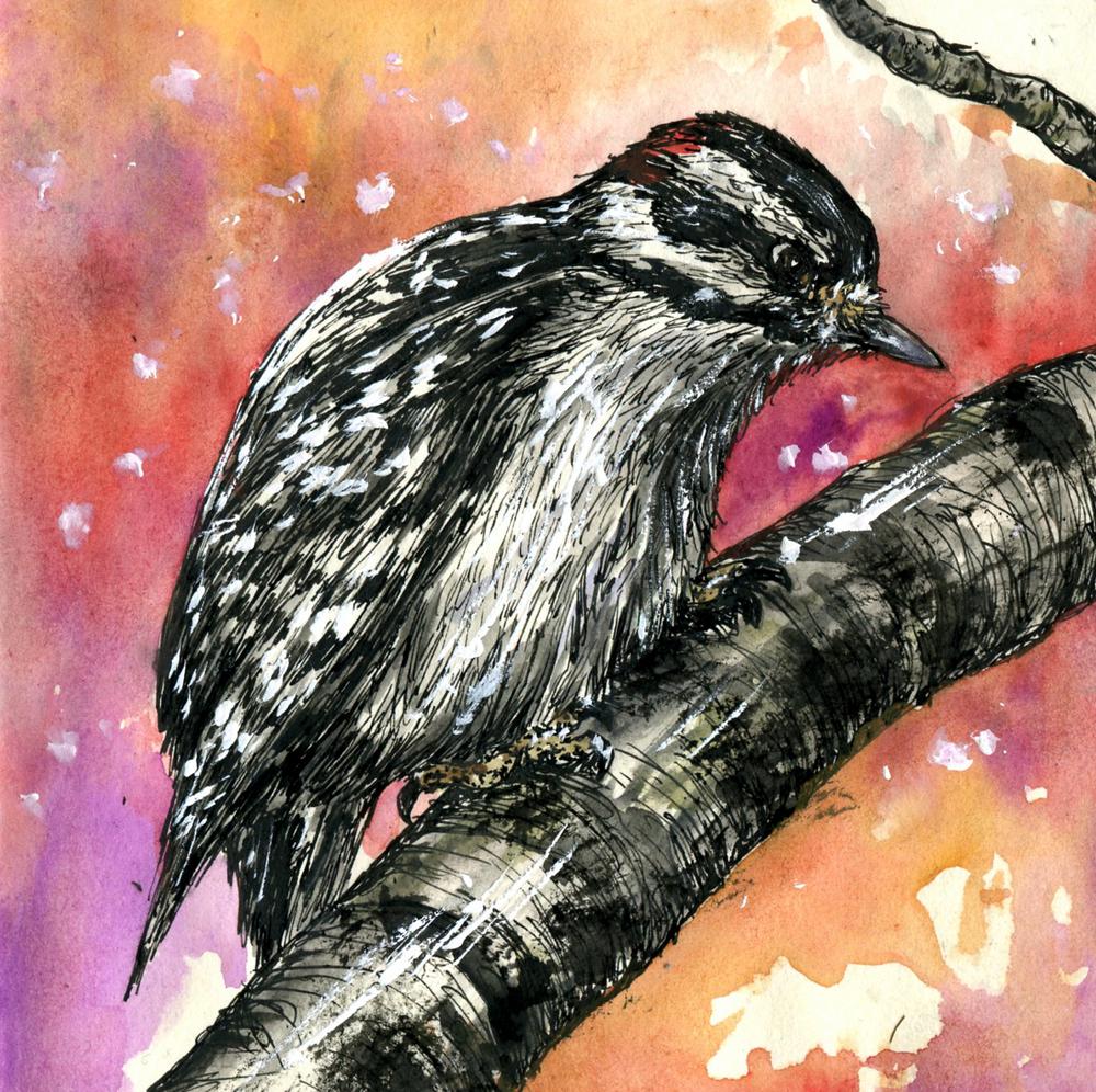 76. Downy Woodpecker