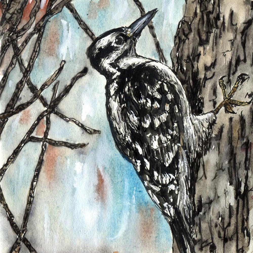 77. Hairy Woodpecker