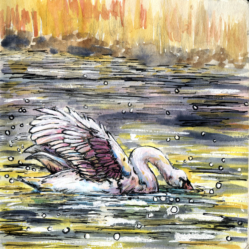 82. Mute Swan