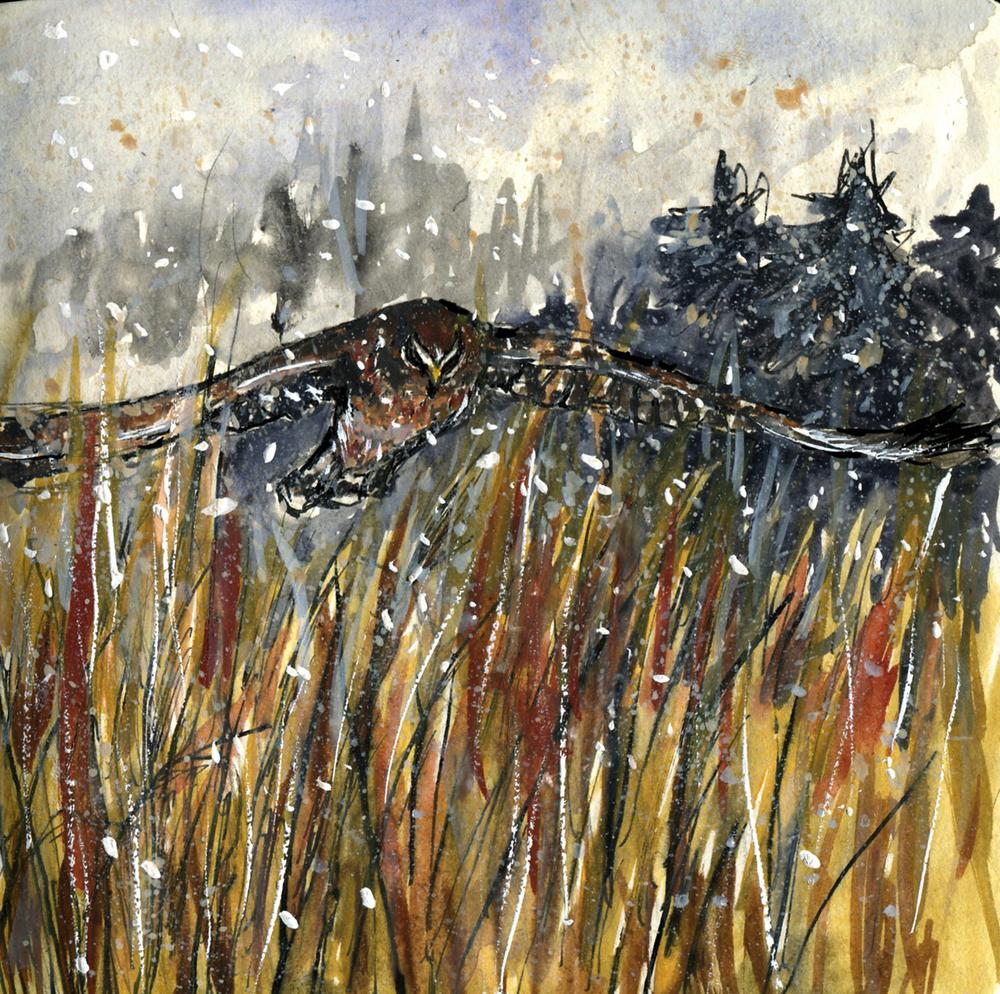 88. Northern Harrier