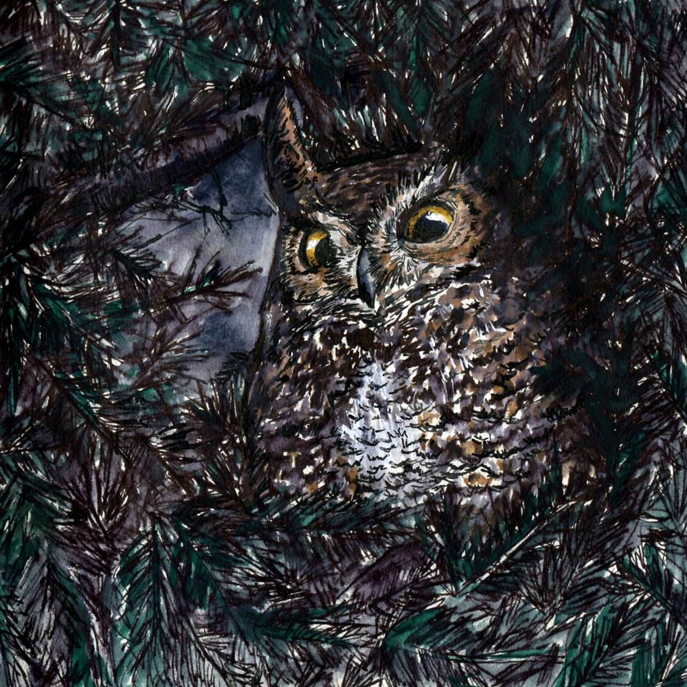 89. Great Horned Owl