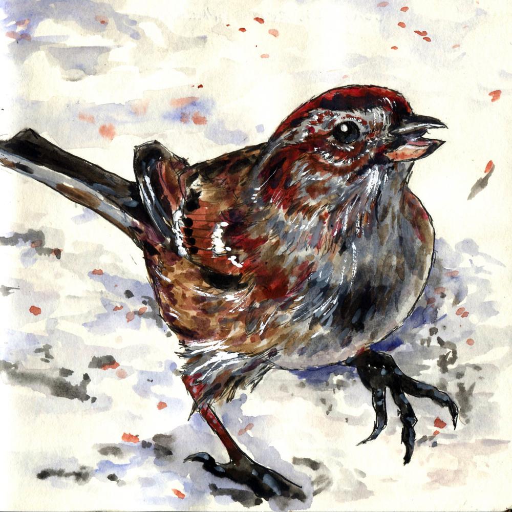 92. American Tree Sparrow