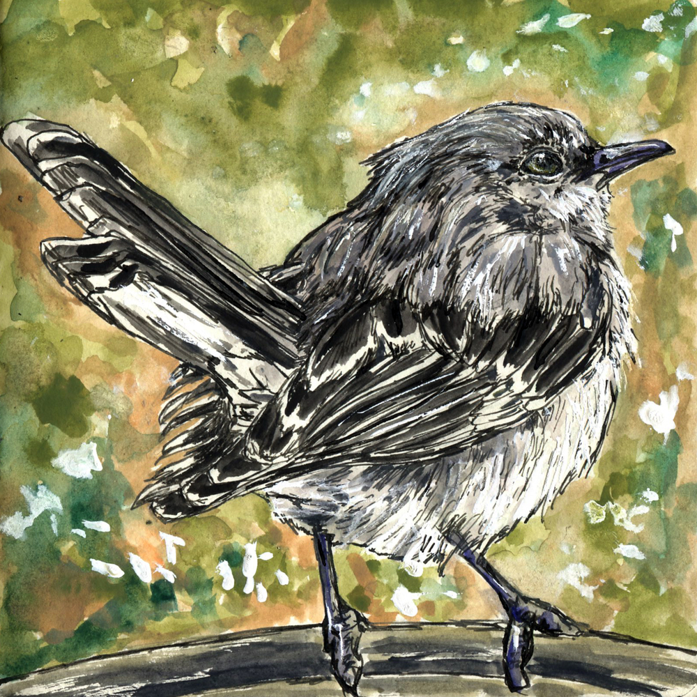 99. Northern Mockingbird