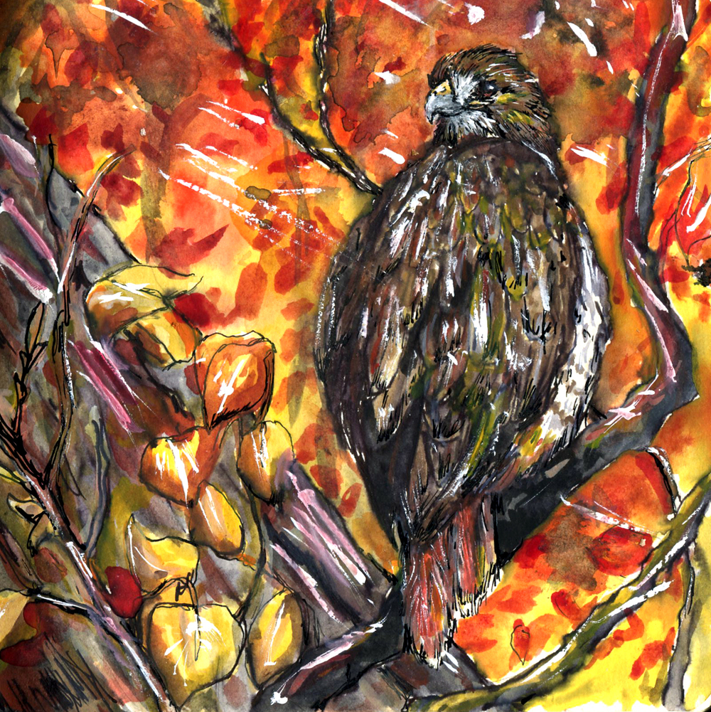 104. Red-tailed Hawk