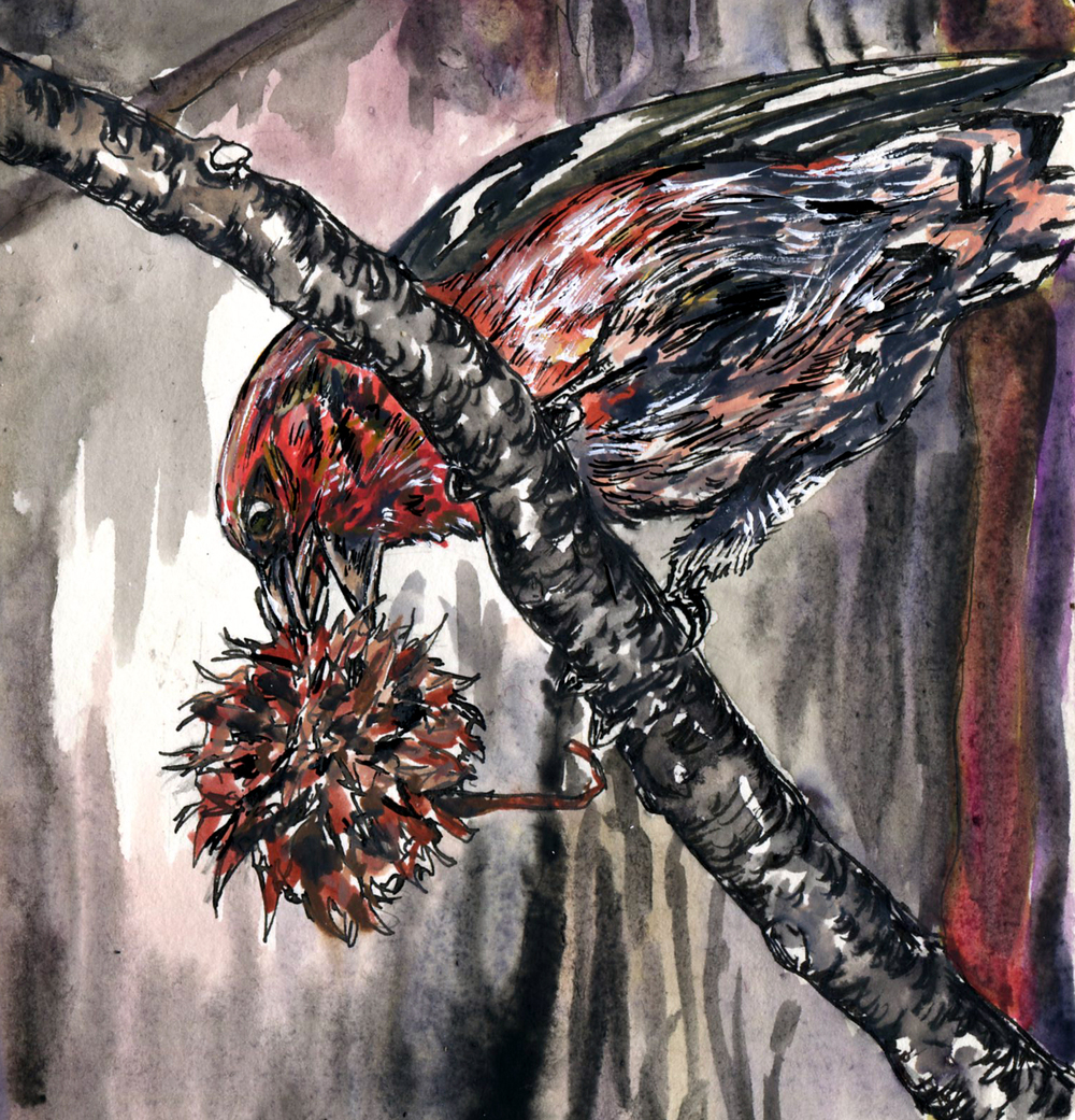 132. White-winged Crossbill