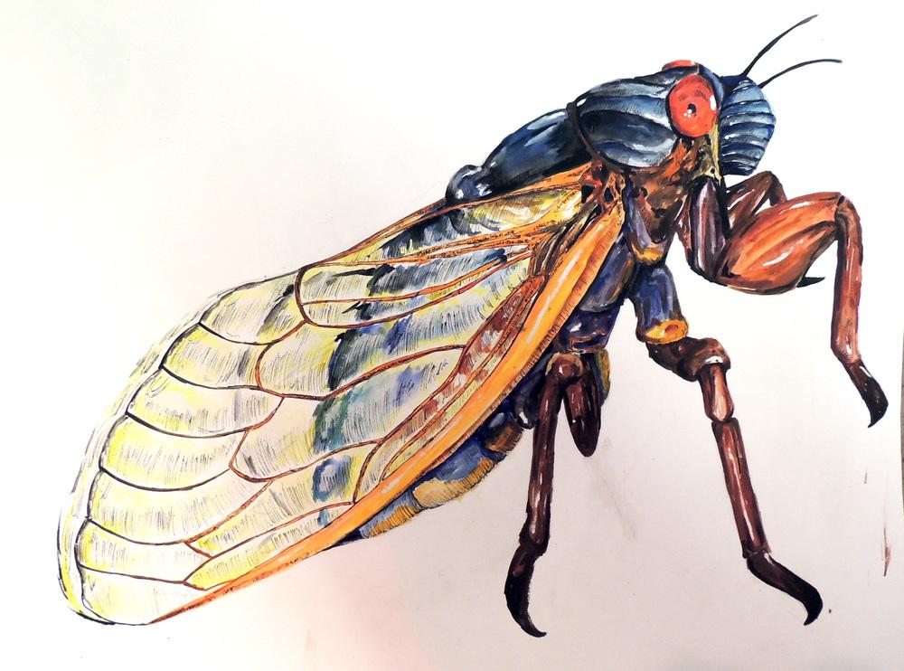 cicada cover.jpg