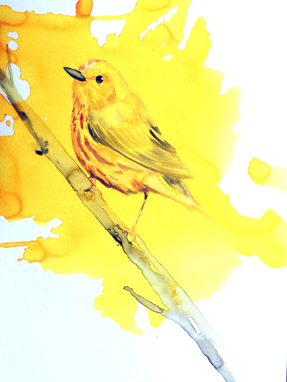 yello warbler diptych small.jpg
