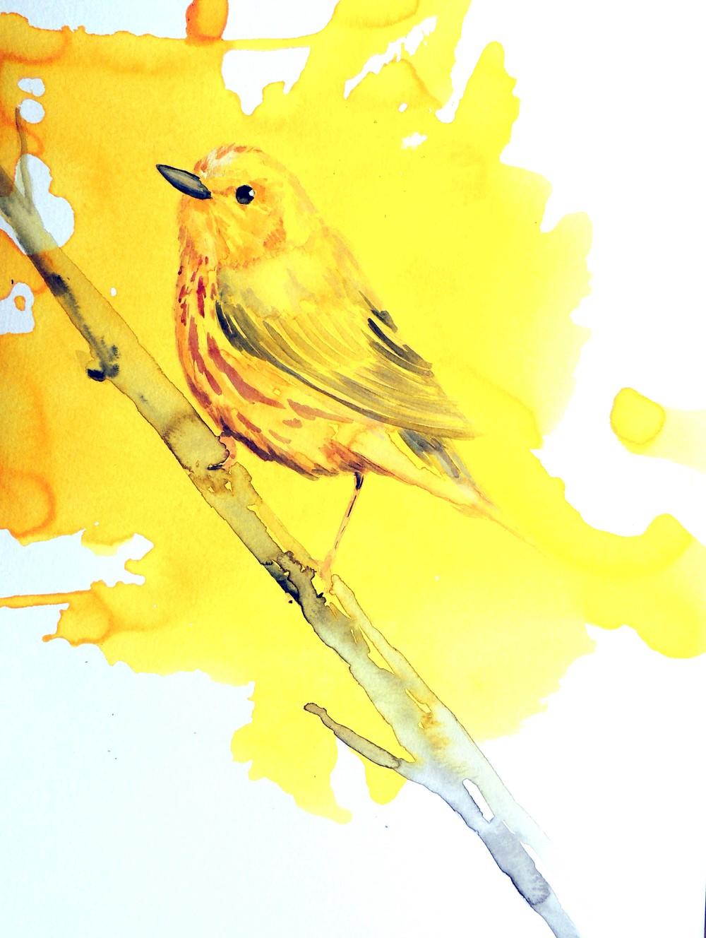 yello warbler diptych small.jpg