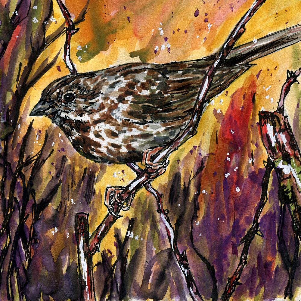94. Song Sparrow