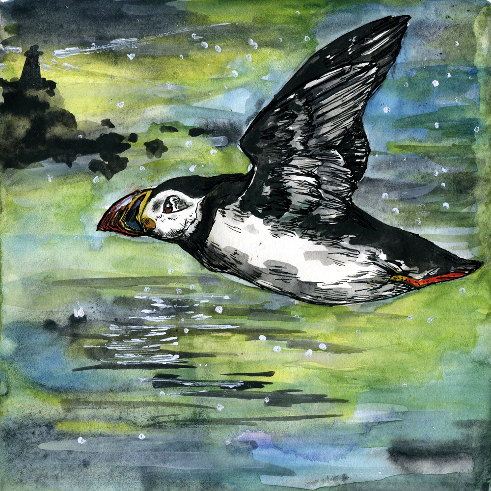 319. Atlantic Puffin