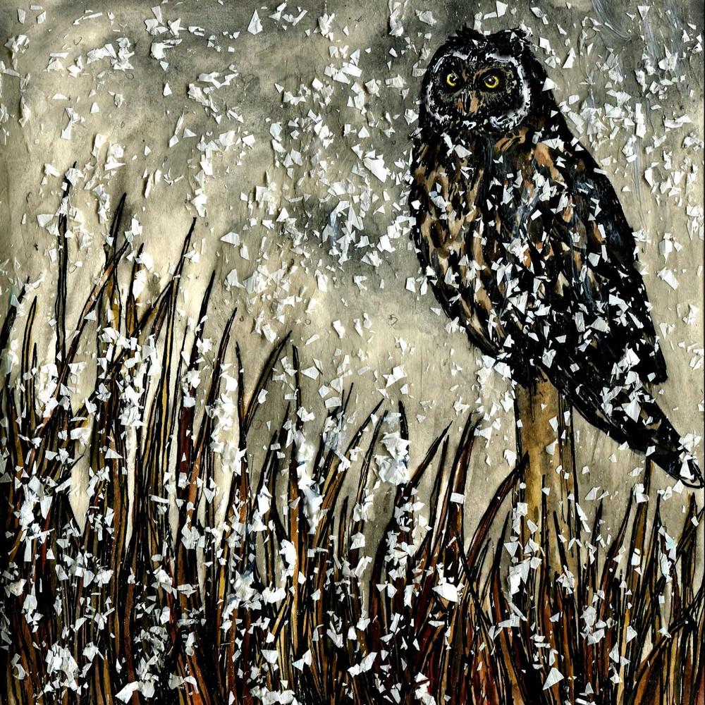 230. Short-eared Owl