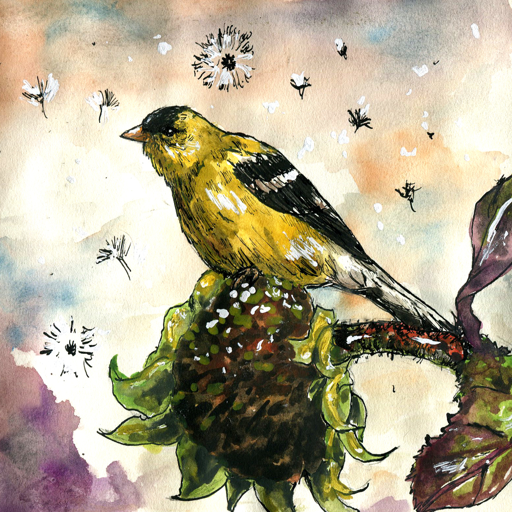 125. American Goldfinch