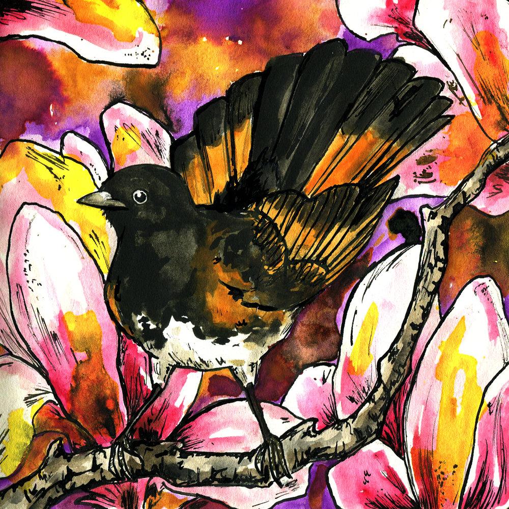 166. American Redstart