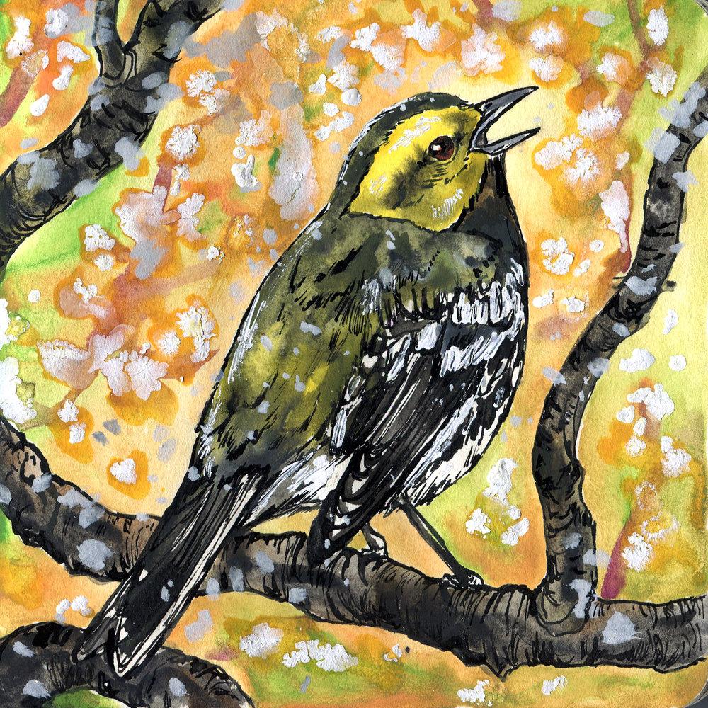 167. Black-throated Green Warbler