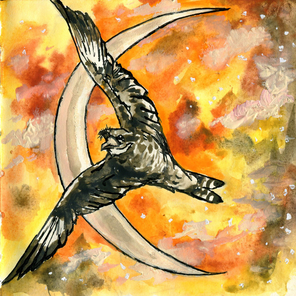 209. Common Nighthawk