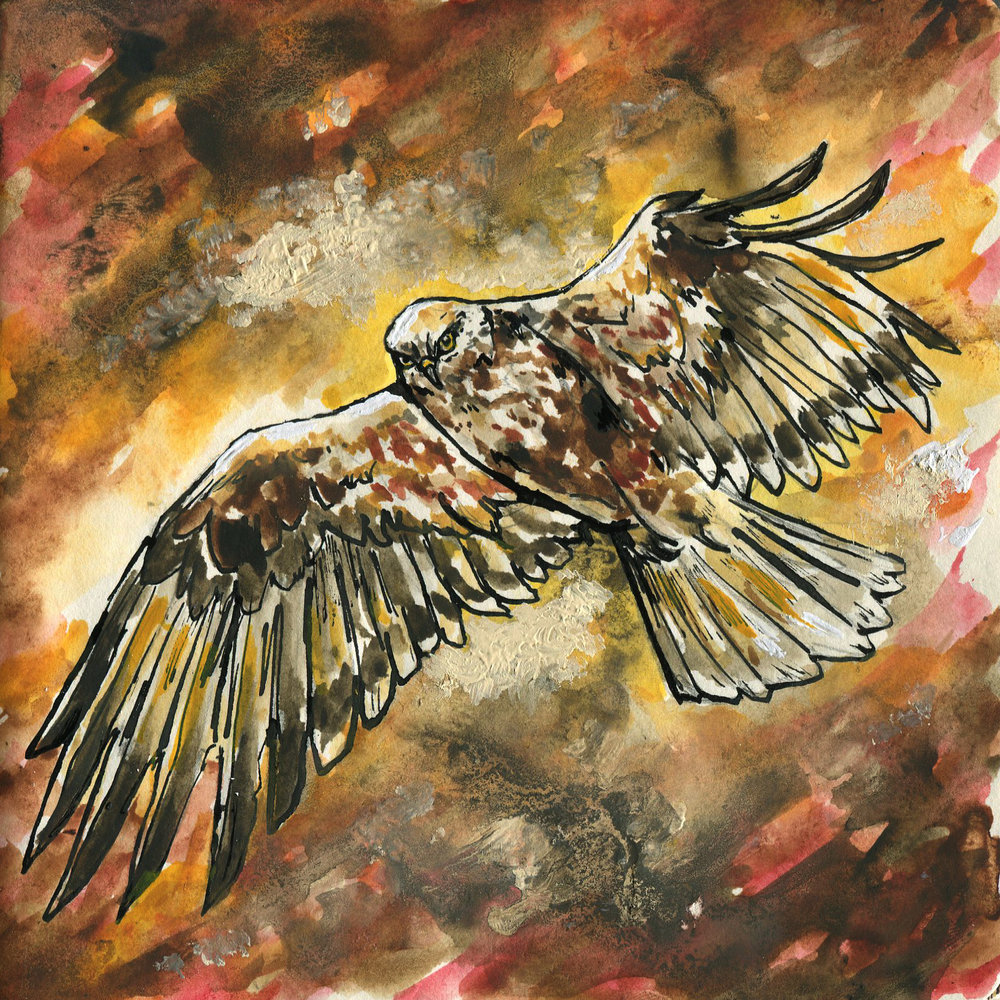 229. Rough-legged Hawk