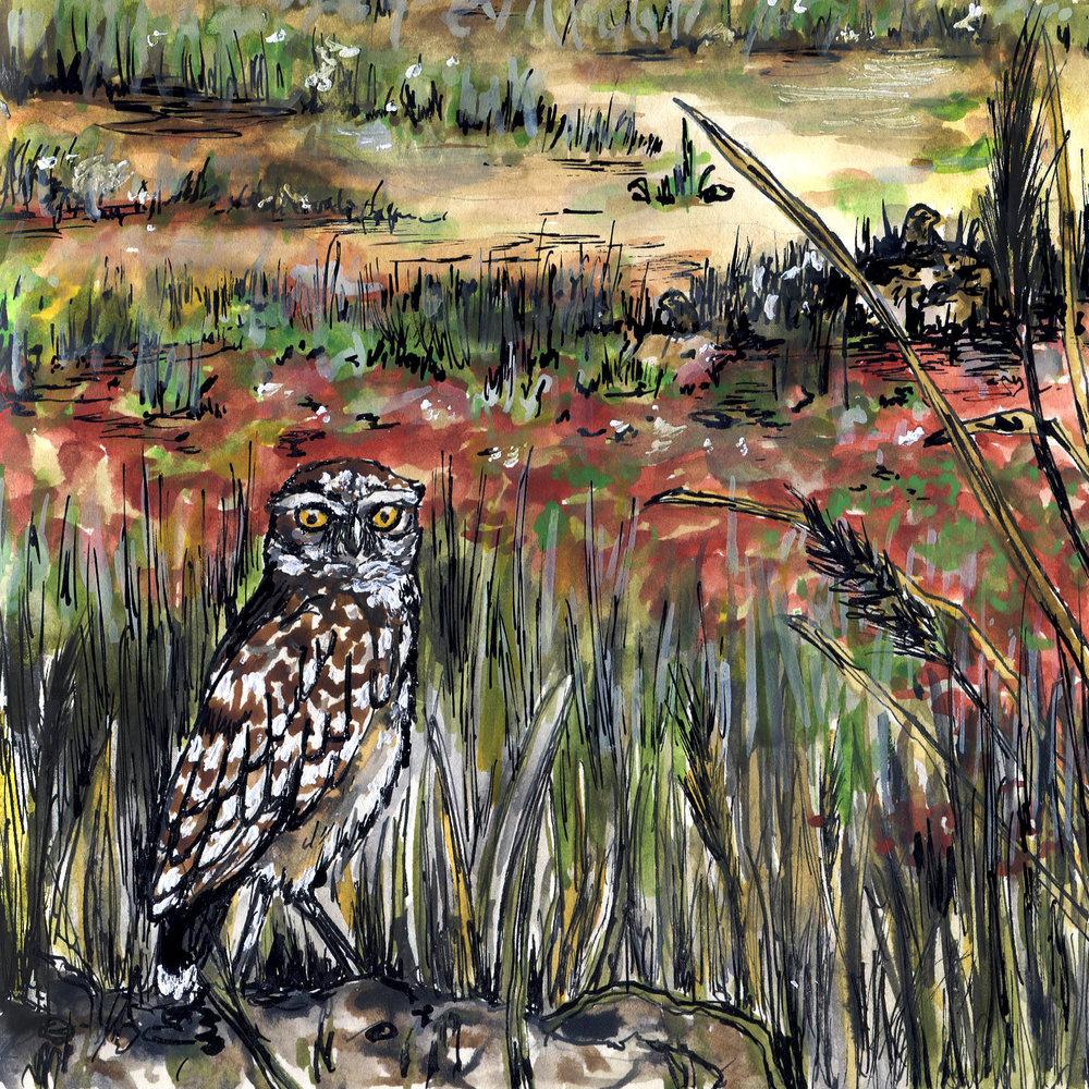 406. Burrowing Owl