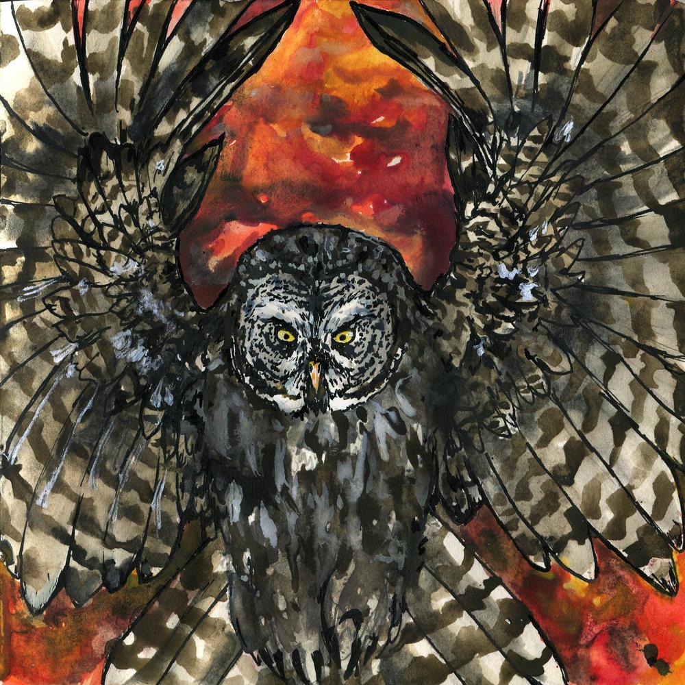 420. Great Gray Owl