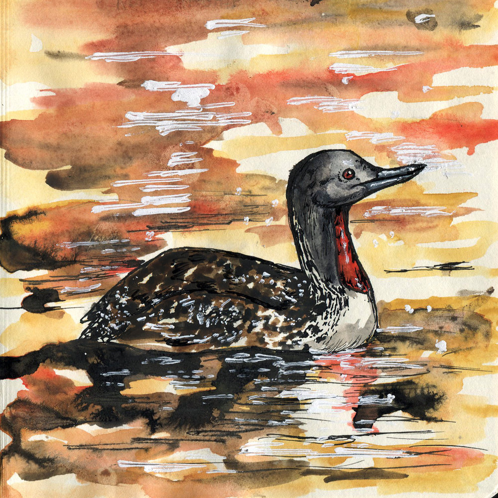 131. Red-throated Loon