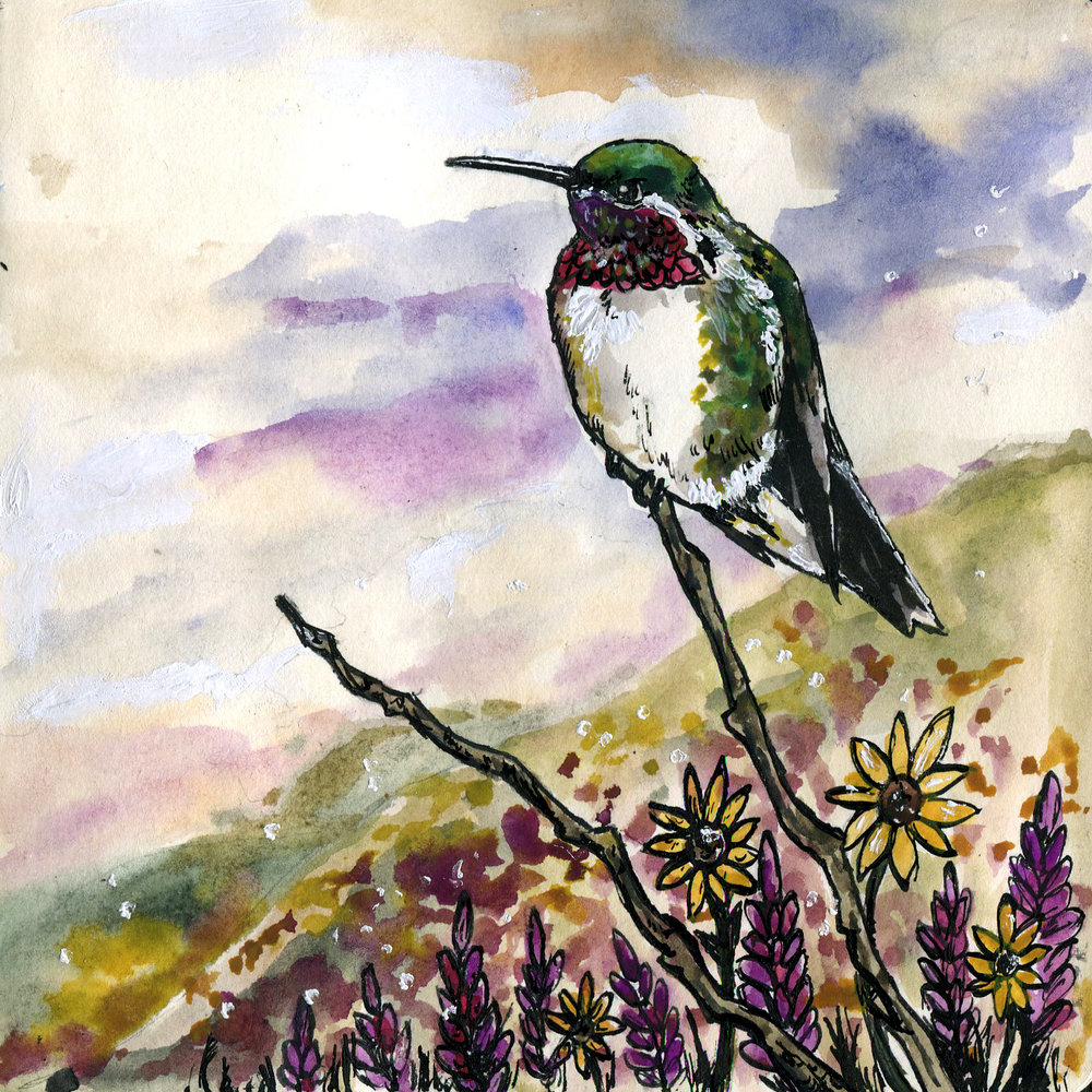 454. Broad-tailed Hummingbird