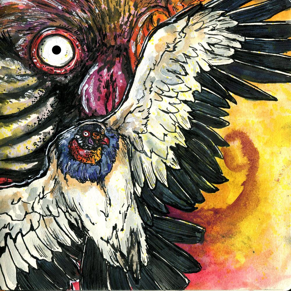 553. King Vulture