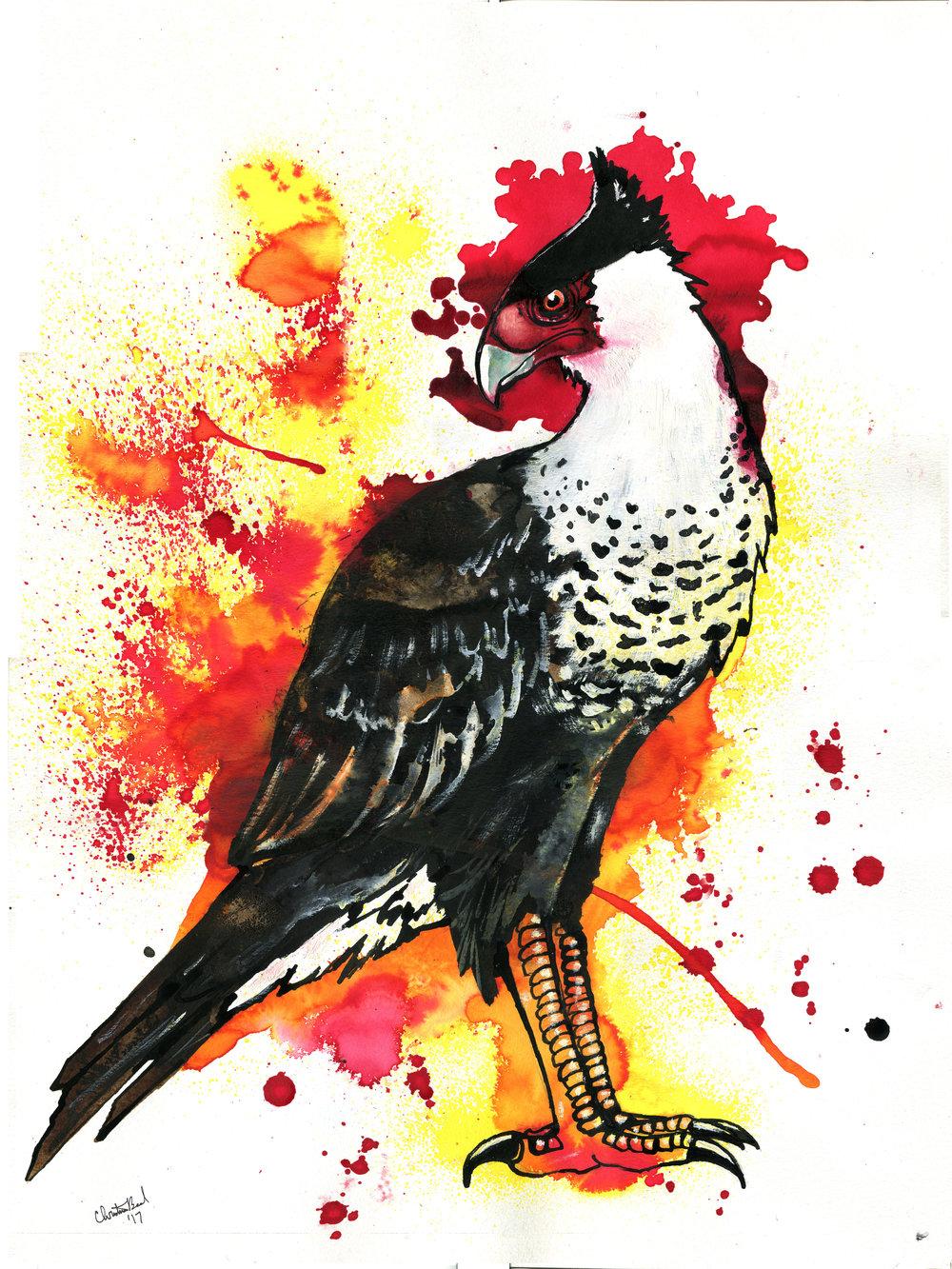 Snake Falcon
