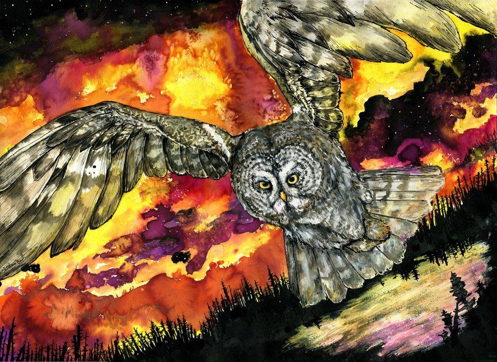 """The Phantom of Yellowstone,"" Great Gray Owl. 2017"