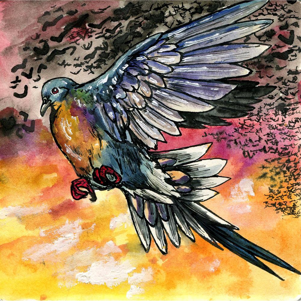1E. Passenger Pigeon