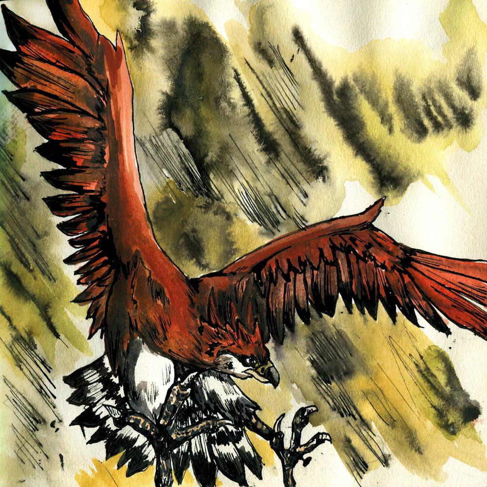 14E. Haast's Eagle