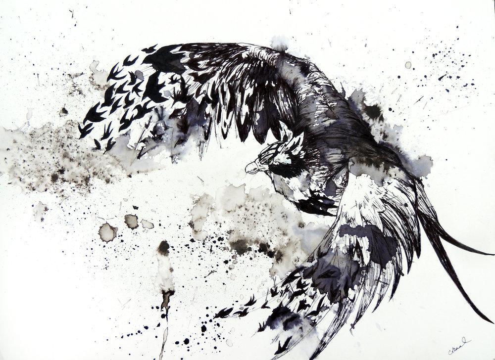King of the Birds.jpg