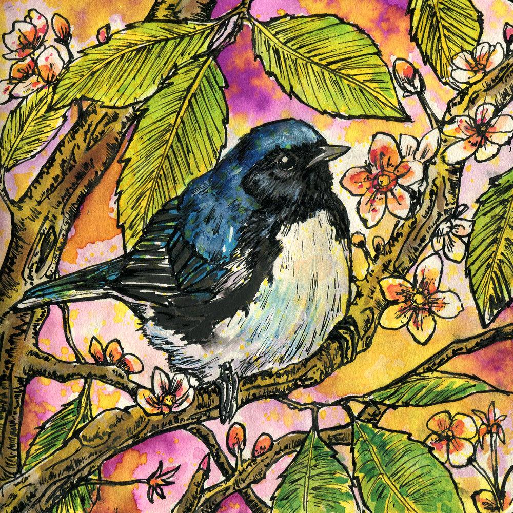 163. Black-throated Blue Warbler