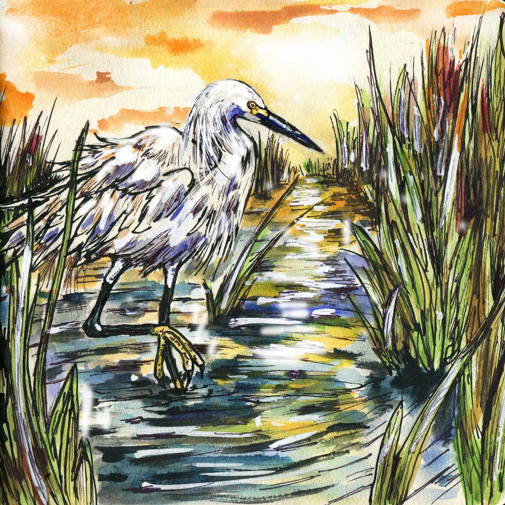 179. Snowy Egret
