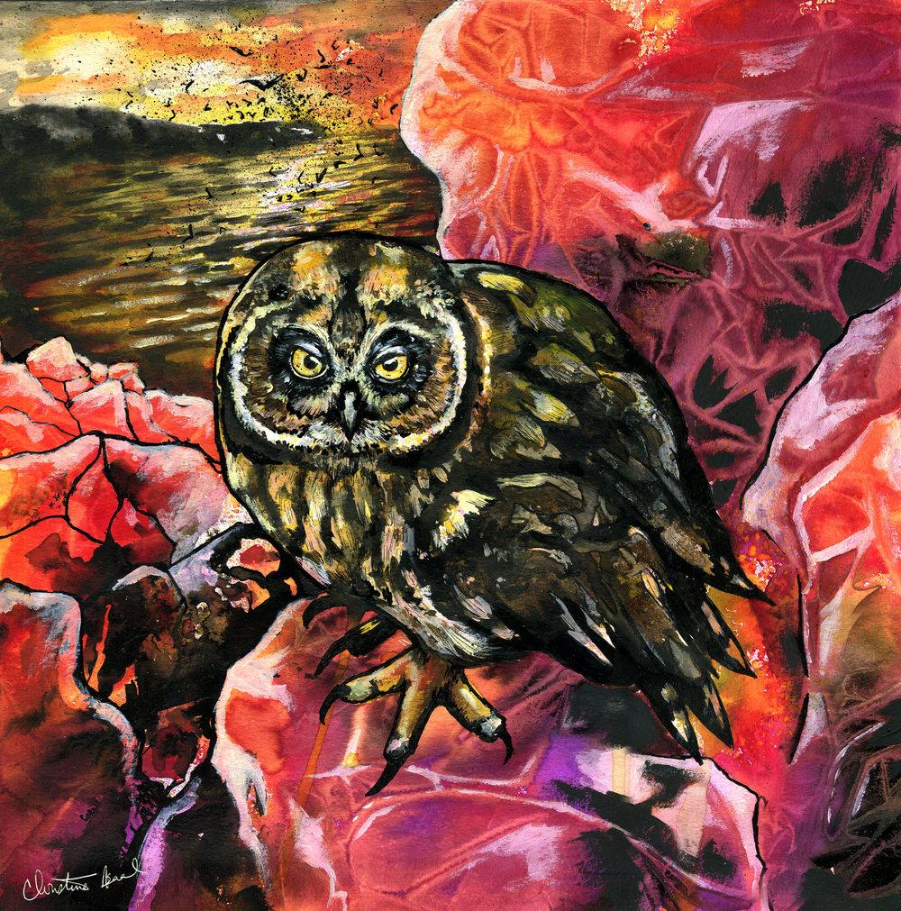 Galâpagos Fire Owl