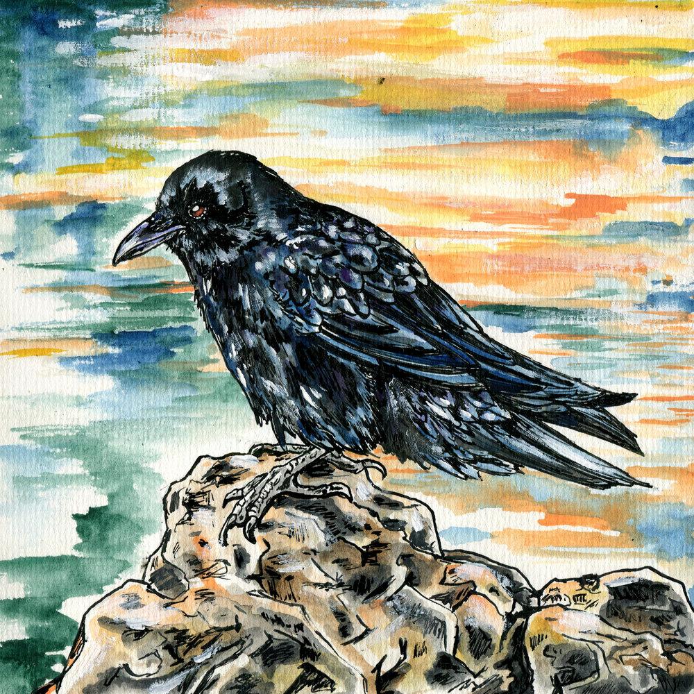 1001. Northwestern Crow