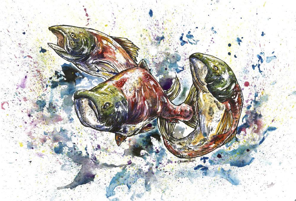 Snookum Salmon