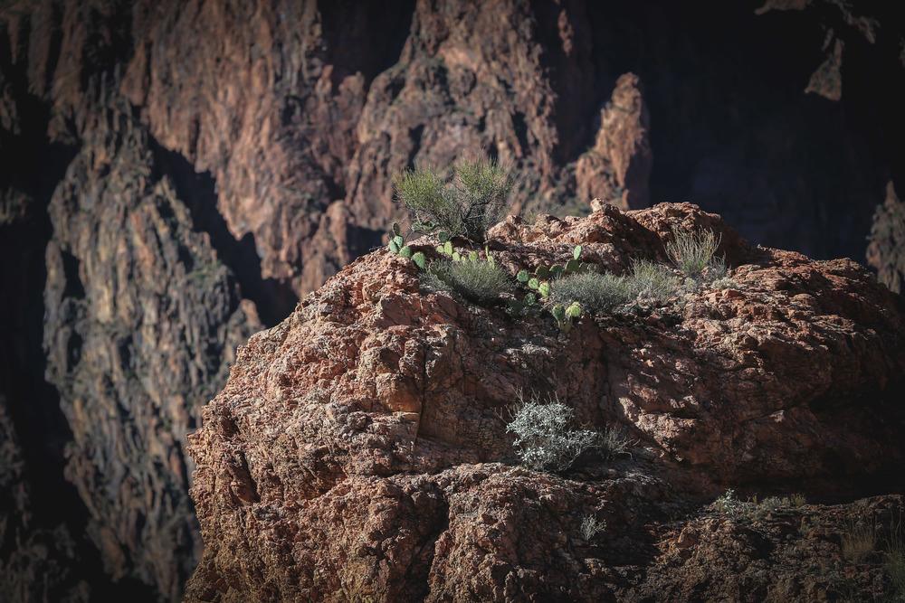 Grand Canyon-1072.JPG