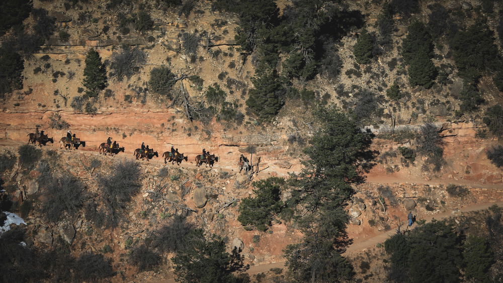 Mule Ride - South Rim