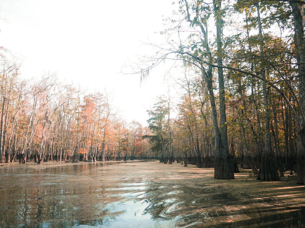 See how all of the trees have the same exact dark line on their trunks? That's where the water rises to every spring. Incredibly consistent throughout the forest. Old Pearl River, LA.